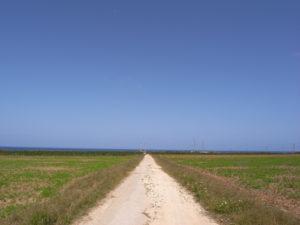 波照間島への行き方 フェリー・高速船の月別欠航率・欠航記録まとめ